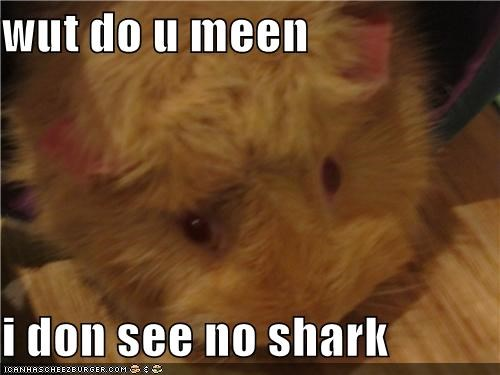 wut do u meen   i don see no shark