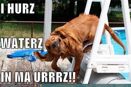 critters,dogs,ears,hair,pool,water