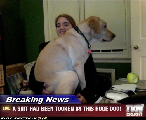 Breaking News - A SHIT HAD BEEN TOOKEN BY THIS HUGE DOG!