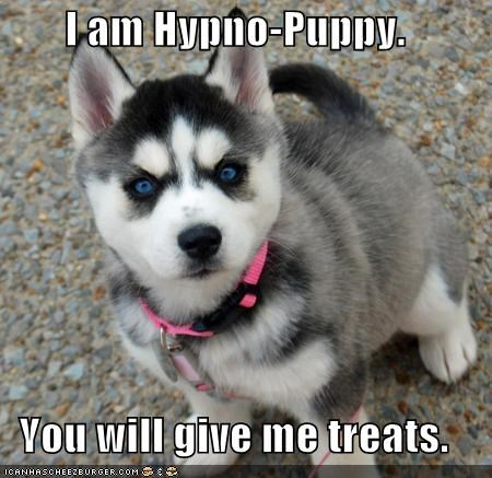I am Hypno-Puppy.  You will give me treats.