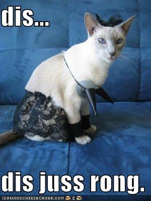 cannot unsee,caption,captioned,cat,do not want,dressed up,freaked out,lingerie,lolwut,siamese,wrong