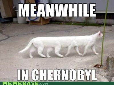 Cats,cherynobyl,legs,Meanwhile,Memes