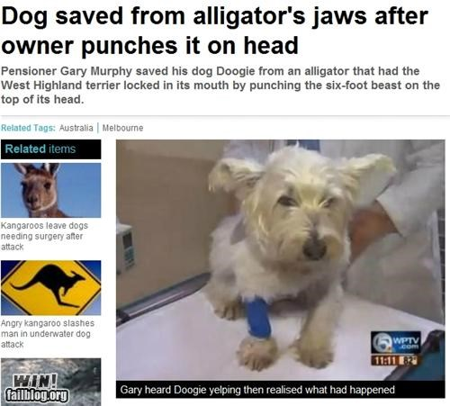 alligator,animals,completely relevant news,dogs,pets,punch