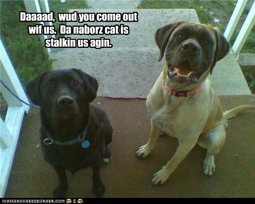 afraid,cat,dad,do not want,labrador,mastiff,neighbor,please,request,scared,stalking