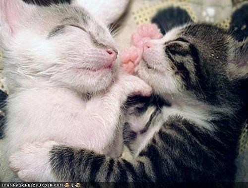 Cyoot Kittehs of teh Day: Face-2-Face Dreamin'