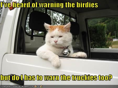 I've heard of warning the birdies  but do I has to warn the truckies too?