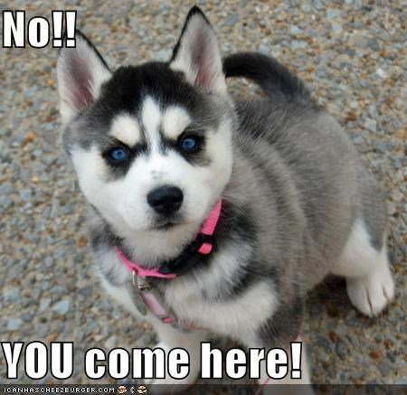 No!!  YOU come here!