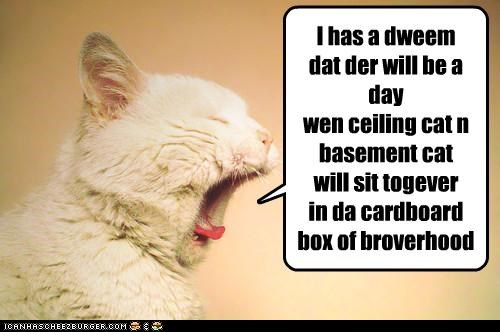 kitteh has a dweem
