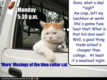 Musings of the Blue Collar Cat