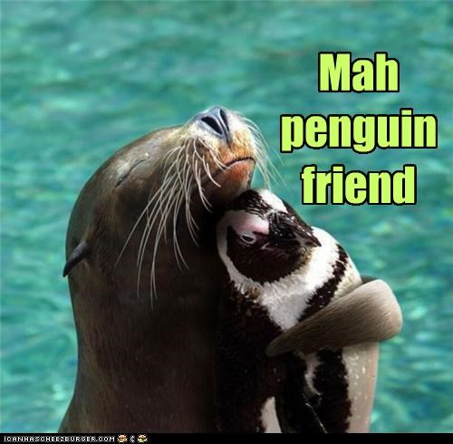 Mah   penguin  friend