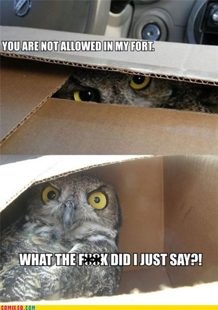 animals,box,forever alone,fort,hipster owl