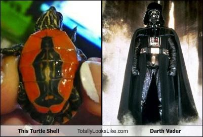 This Turtle Shell Totally Looks Like Darth Vader