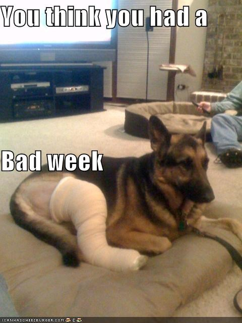 accident,bad,borked,cast,german shepherd,injury,leg,think,week,you