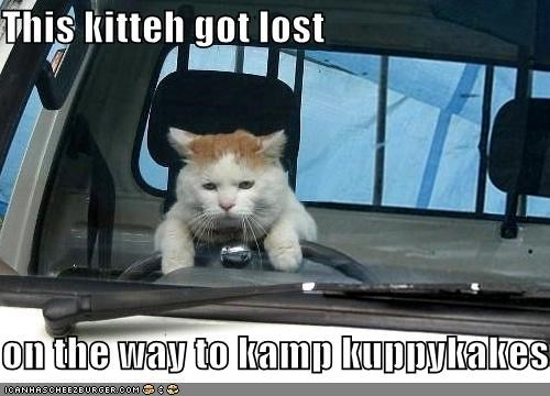This kitteh got lost  on the way to kamp kuppykakes