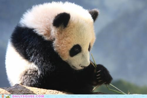 Squee Spree: Pensive Panda Contemplates the Meaning of 'Goodbye'