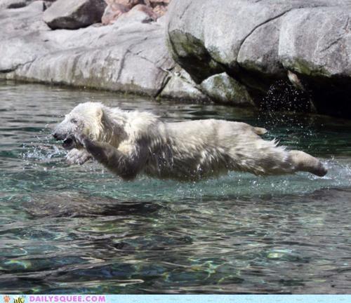 acting like animals,cape,confused,cub,falling,fishing,flying,ice,ice cap,jumping,polar bear,pun,slowly