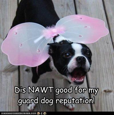 Dis NAWT good for my guard dog reputation!