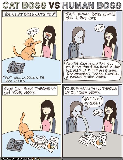 boss,cat versus human,comic,comics,difference,hoomins,vs,work