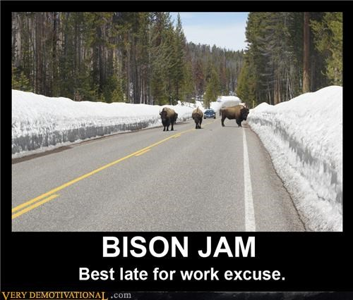 bison,hilarious,late,work,wtf