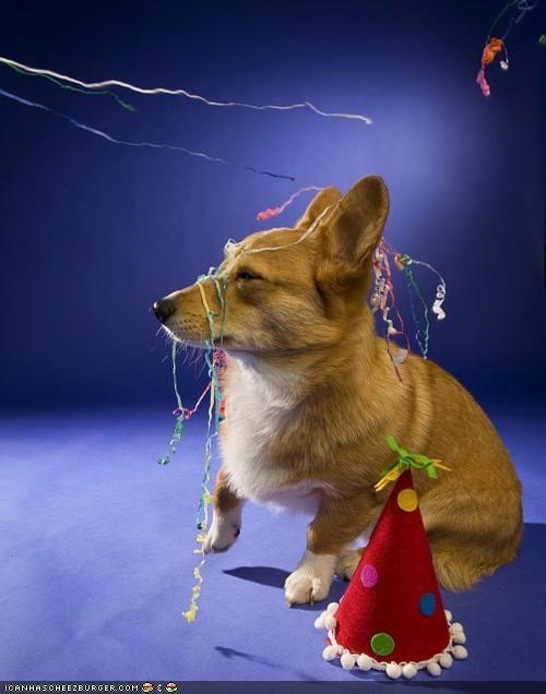 corgi,cyoot puppeh ob teh day,hat,Party,popper,streamers