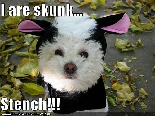 I are skunk...  Stench!!!