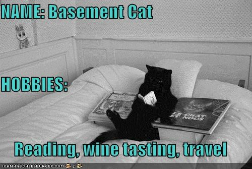 NAME: Basement Cat HOBBIES: Reading, wine tasting, travel