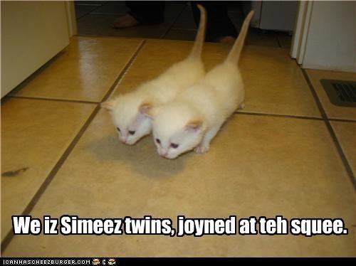 We iz Simeez twins, joyned at teh squee.
