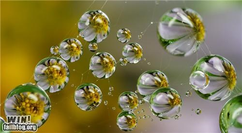 Mother Nature FTW: Dew Drops