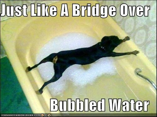 best of the week,bridge,bridge over troubled water,bubbled,Hall of Fame,literalism,over,parody,pun,puppy,rottweiler,Simon and Garfunkel,song,title,troubled,water