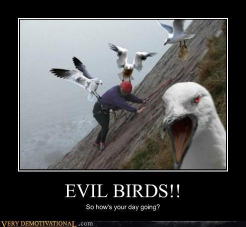 climbing,evil birds,hilarious,seagulls