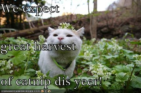 We expect great harvest of catnip dis yeer!