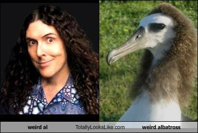 """Weird Al"" Yankovic Totally Looks Like Weird Albatross"