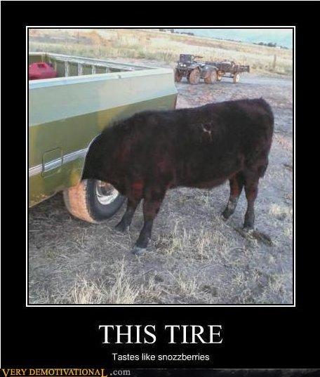 animals,cow,creepy,hilarious,truck,wtf