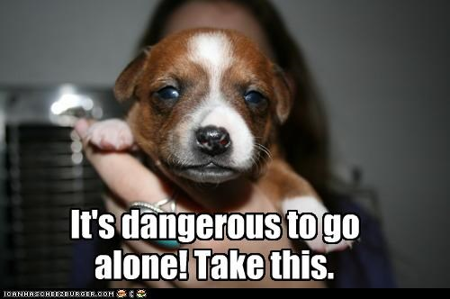 adorbz,its dangerous to go alone,protection,puppy,take this,whatbreed,youll-need-this