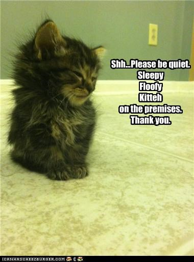 Shh...Please be quiet. Sleepy Floofy Kitteh on the premises. Thank you.