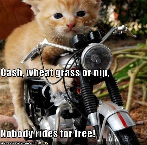 Cash, wheat grass or nip,  Nobody rides for free!