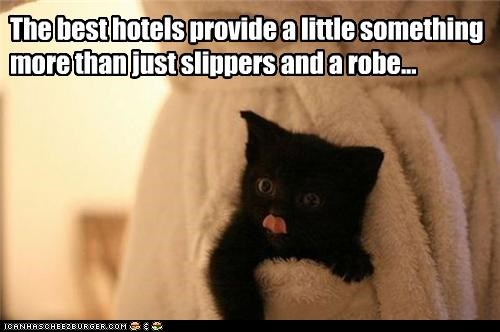 best,caption,captioned,cat,hotels,innuendo,kitten,more,provide,robe,slippers