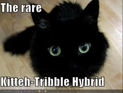 The rare  Kitteh-Tribble Hybrid