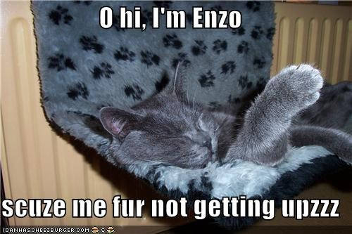 O hi, I'm Enzo  scuze me fur not getting upzzz