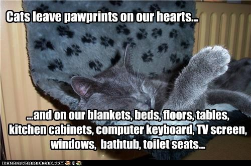 Cats leave pawprints on our hearts...