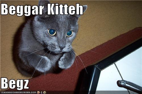 Beggar Kitteh  Begz