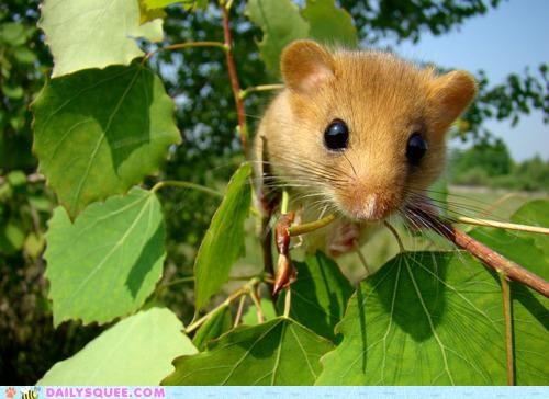 cute,idiom,leaves,peeking,rodent,waiting,waiting in the wings,what-is-this-animal