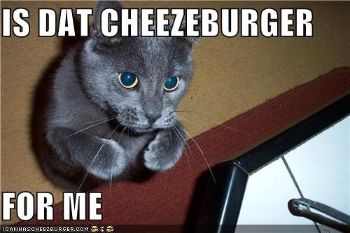 IS DAT CHEEZEBURGER  FOR ME