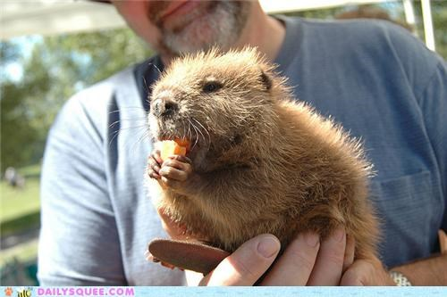 Squee Spree: Beavers Vs. Otters