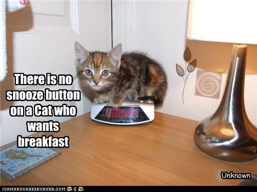 Cat Quotes #7