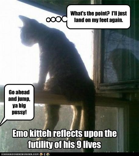Emo kitteh reflects upon the futility of his 9 lives