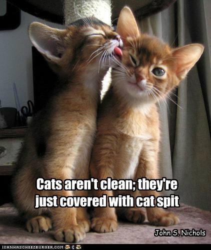 Cat Quotes #8
