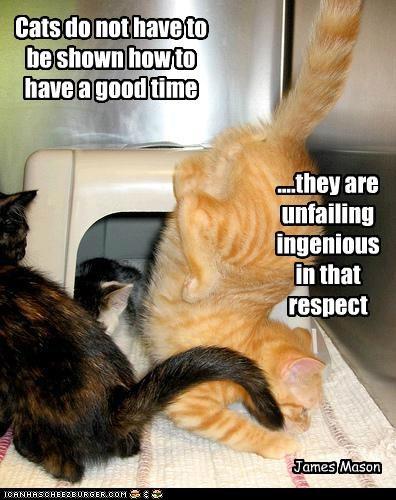 Cat Quotes #11