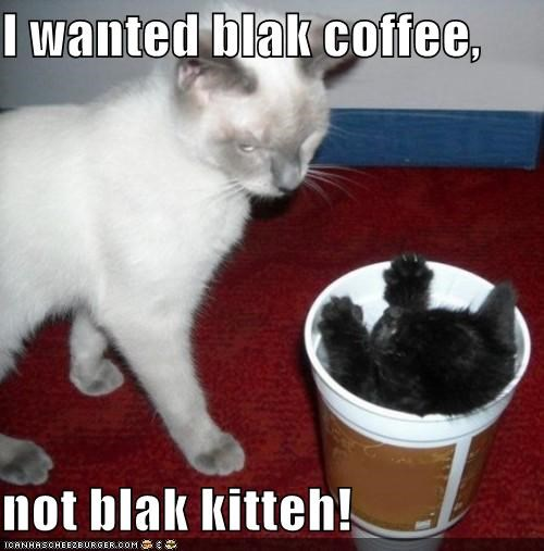 I wanted blak coffee,  not blak kitteh!