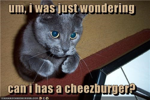 um, i was just wondering   can i has a cheezburger?
